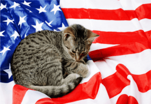 cat calm 4th of july