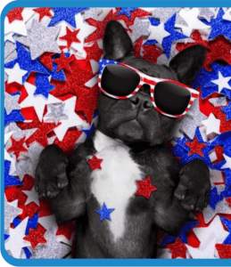 dog in sun glasses on 4th of july